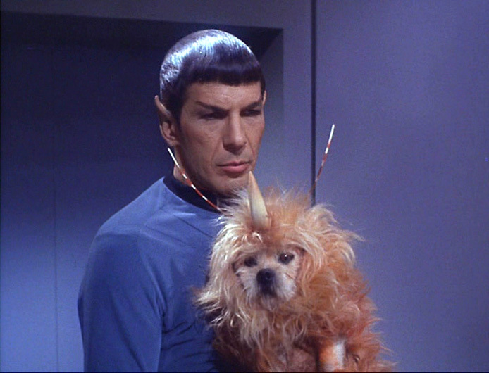 space_dog